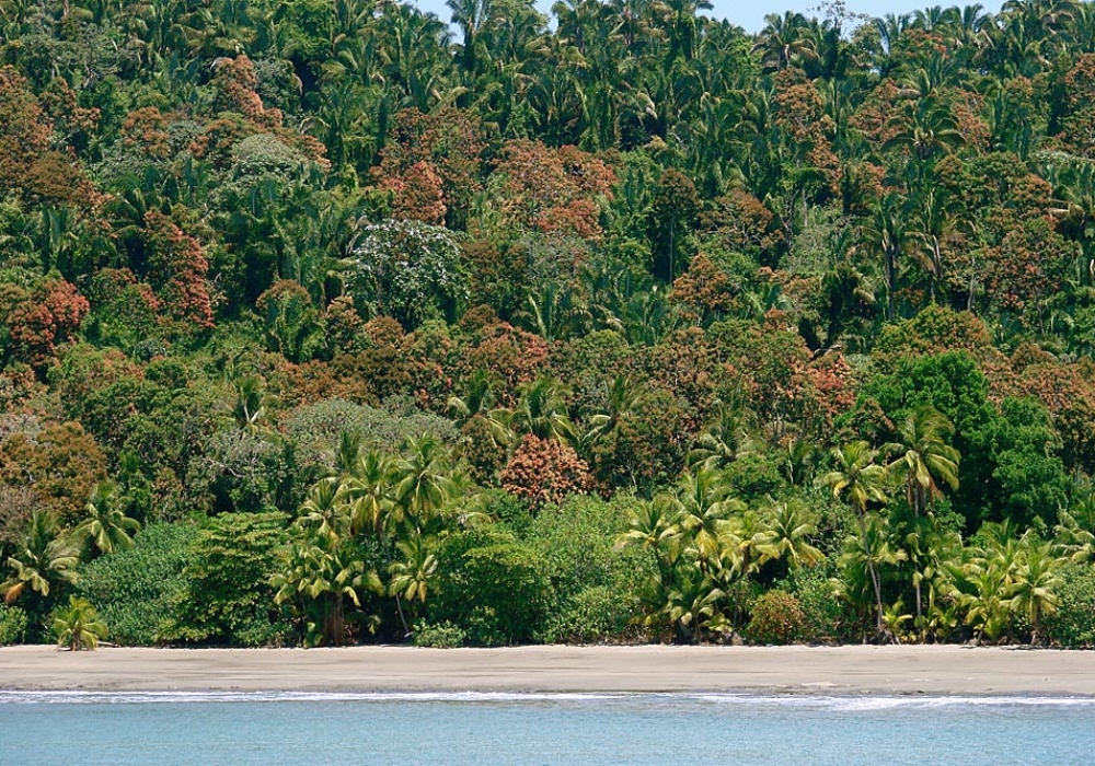 Isla Coiba Photographs