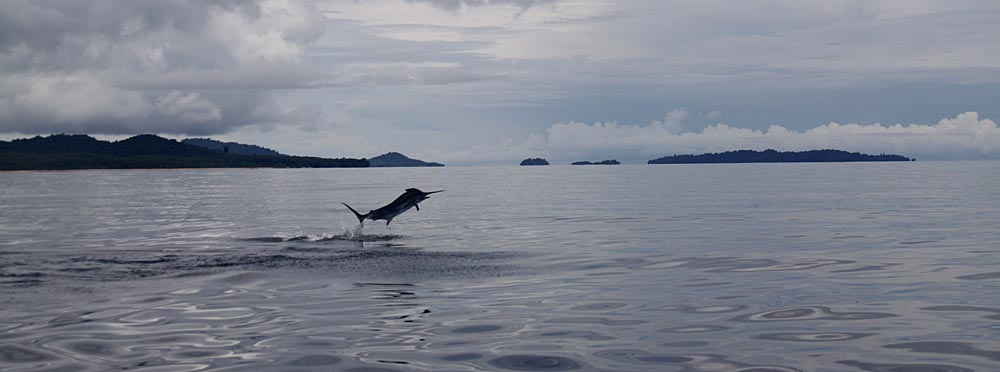 sportfishing isla coiba, panama