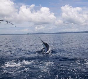 sportfishing charters panama