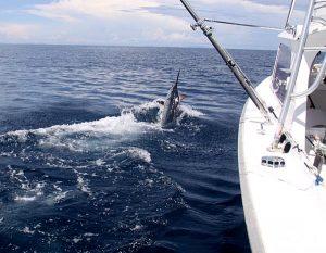 sportfishing Coiba